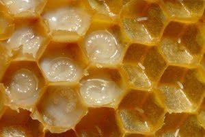 Exler (embryons de reines d'abeille)